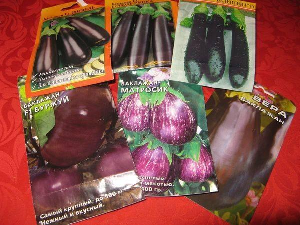 Урожайный и раннеспелый сорт баклажана «буржуй»