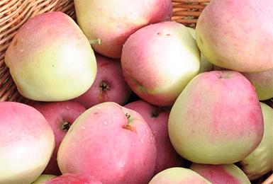 О яблоне кандиль орловский, описание сорта, характеристики, агротехника