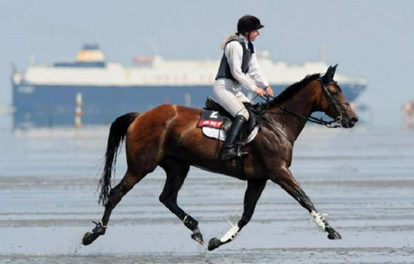 Вид бега лошади: аллюры и их разновидности