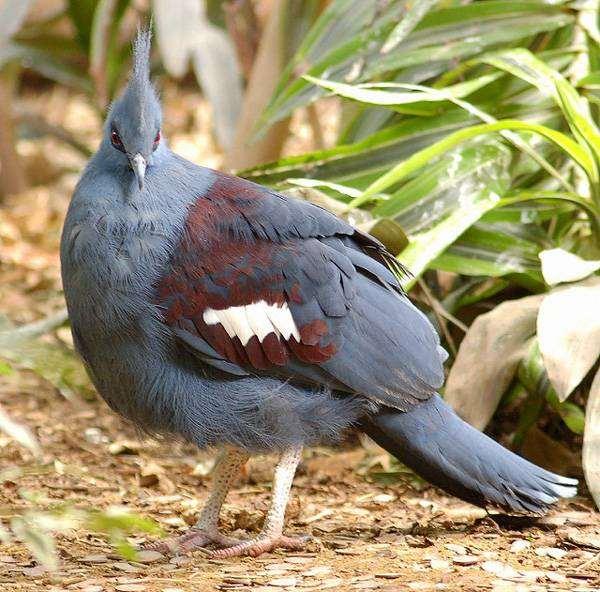 Виды голубей. описание, особенности, названия и фото видов голубей