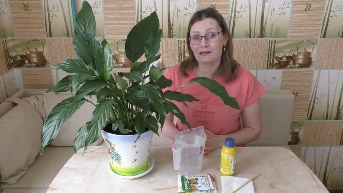 Почему желтеют цветы. почему желтеют кончики и края листьев у комнатных растений.