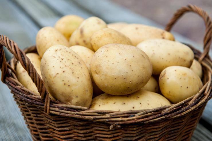 Лучшие сорта картофеля для сибири с фото и описанием