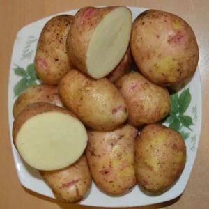 Картофель аврора: характеристика и описание сорта, фото, отзывы