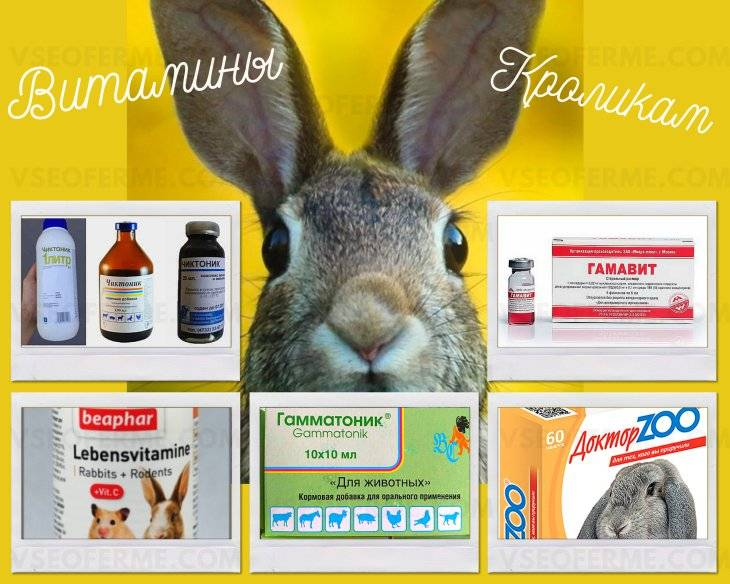Витамины для кроликов: перечень и в каких случаях давать