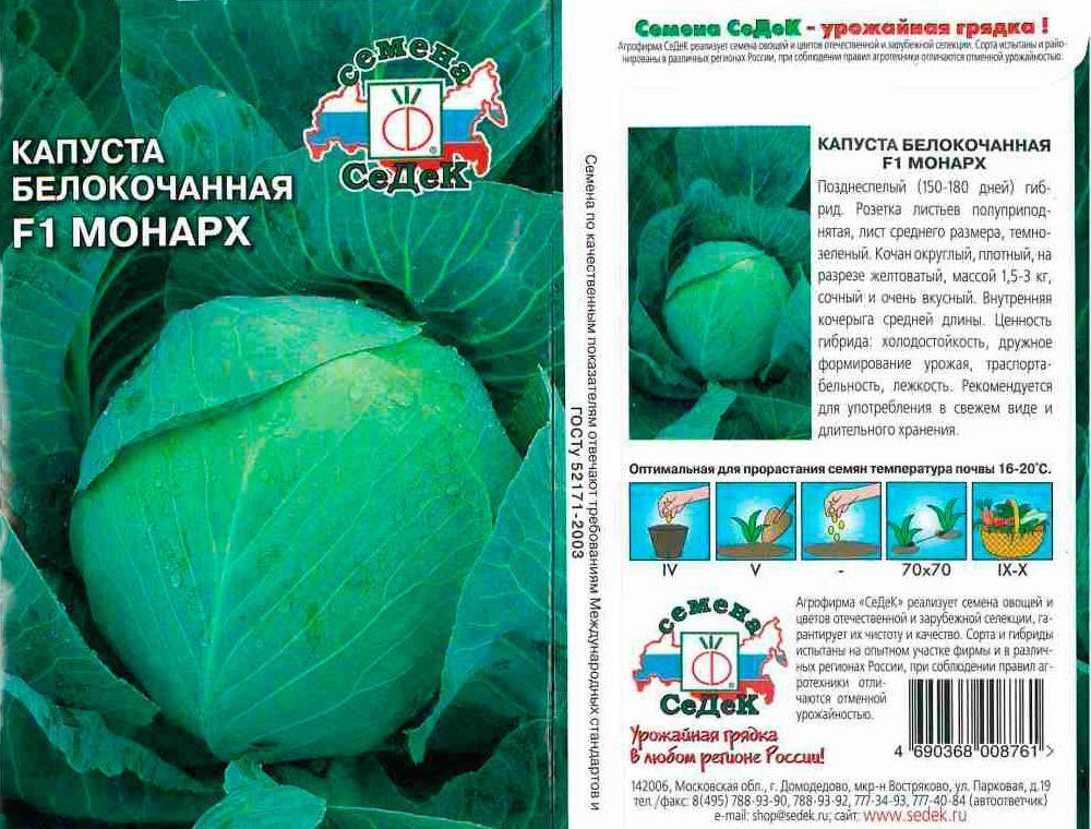 Выращивание белокачанной капусты в открытом грунте