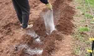 Зола древесная как удобрение для почвы: суммарный опыт от огородников