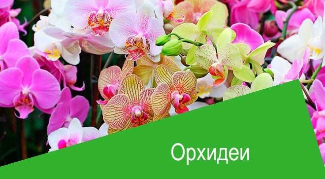 Орхидеи: применение витаминов и стимуляторов - комнатные растения. - страна мам