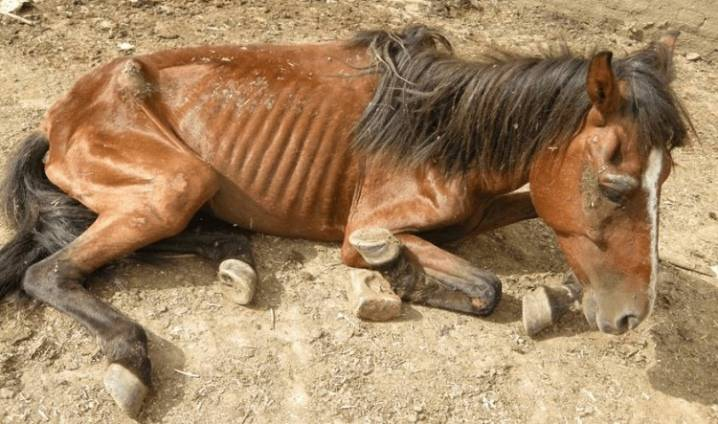 Описание лошадей породы Рысак