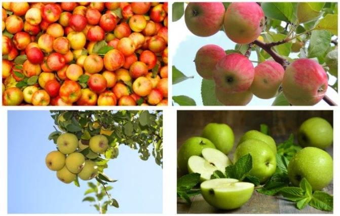 Яблочный сок: его польза и вред, сколько можно выпить за день, правила хранения