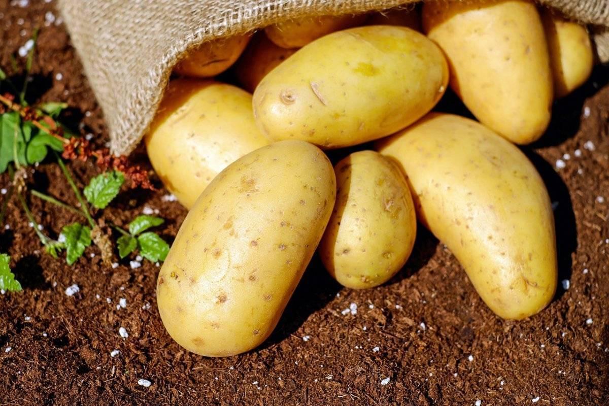 Табу вск от колорадского жука и проволочника: инструкция по применению средства для картофеля, отзывы о применении, табу трио
