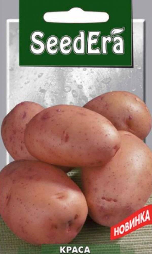 Картофель латона: характеристики сорта в таблице, сравнение, отзывы