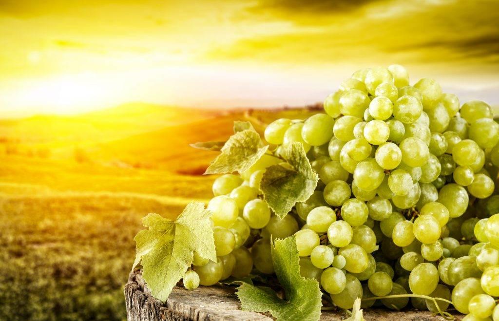 Полезные свойства зеленого винограда