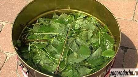 Удобрение из крапивы - как сделать настой, применение в огороде - почва.нет