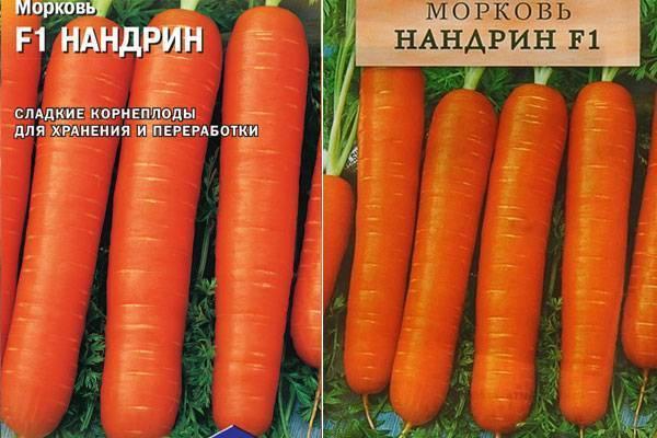 Сорта моркови: урожайность и характеристики лучших видов моркови, описание кормовой и для длительного хранения, фото и отзывы