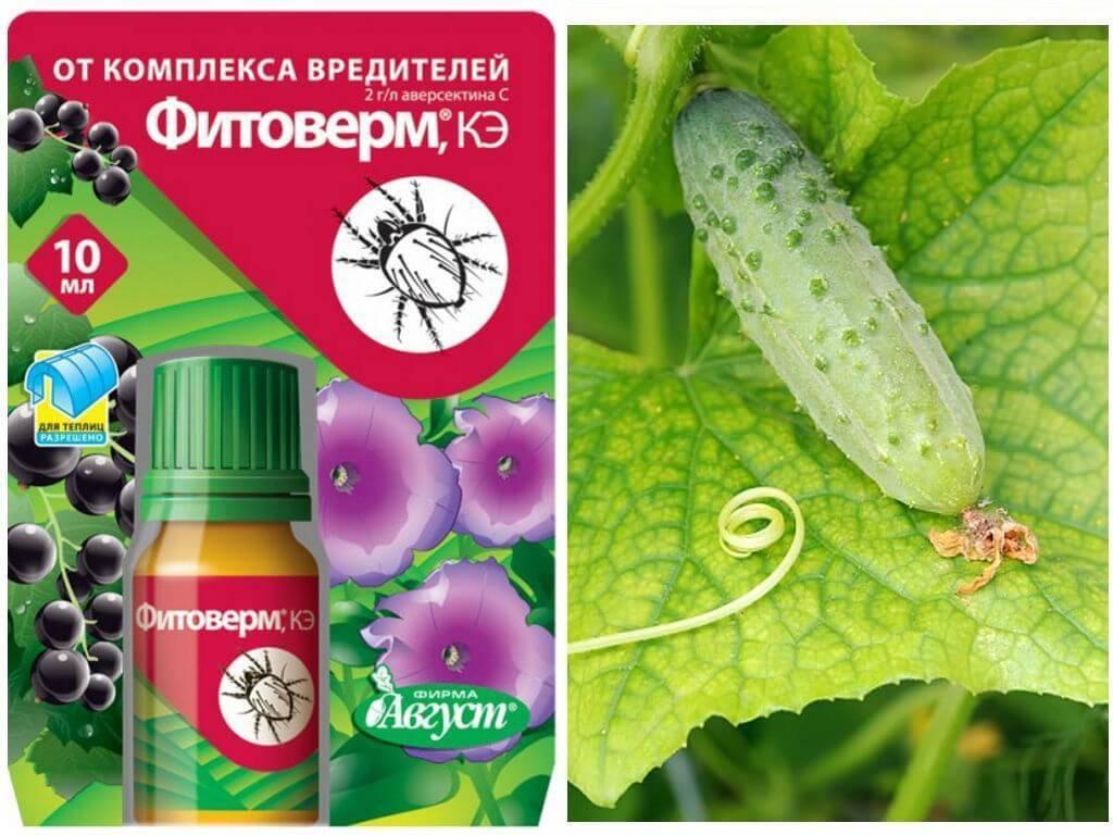 Фитоверм: инструкция по применению, отзывы, когда обрабатывать растения и как