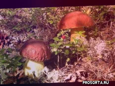 Утро. лес. грибы.