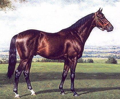 Арабская лошадь (46 фото): описание чистокровных коней арабской породы. скакуны белой, черной и других мастей