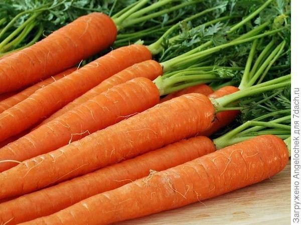 Самые сладкие сорта моркови: какие крупные и высокоурожайные, сочная морковка для длительного хранения, отзывы о сладком хрусте, описание поздней сладкой f1