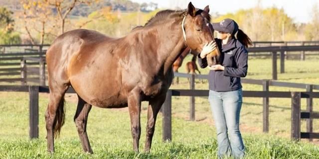 Беременность у лошадей: сроки, определение жеребости и роды