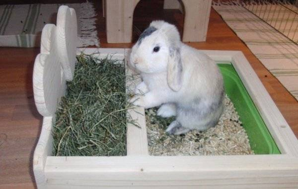 ᐉ как сделать сенник для кроликов своими руками? - zooon.ru