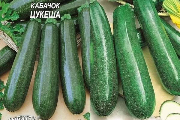Кабачок цукеша: характеристика и описание сорта, правила посадки и ухода, фото выращенного урожая
