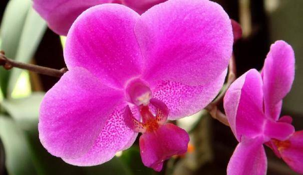 Почему не цветет орхидея: причины, по которым ваша красавица уже долго выпускает в домашних условиях только новые листья или корни, а бутоны у нее растут плохо selo.guru — интернет портал о сельском хозяйстве