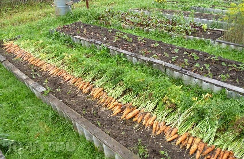 Читать книгу минимум работы, максимум урожая! метод игоря лядова для любой почвы игоря лядова : онлайн чтение - страница 9