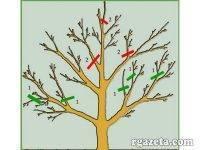 Правильная обрезка яблони осенью — правила, особенности, нюансы