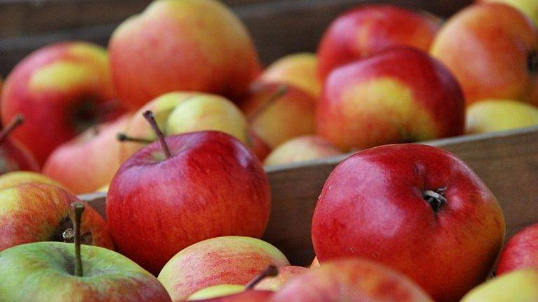 Как сохранить яблоки на зиму свежими в домашних условиях в квартире