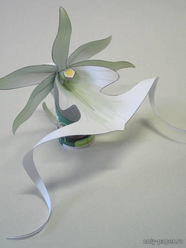 Особенности выращивания орхидеи Призрак
