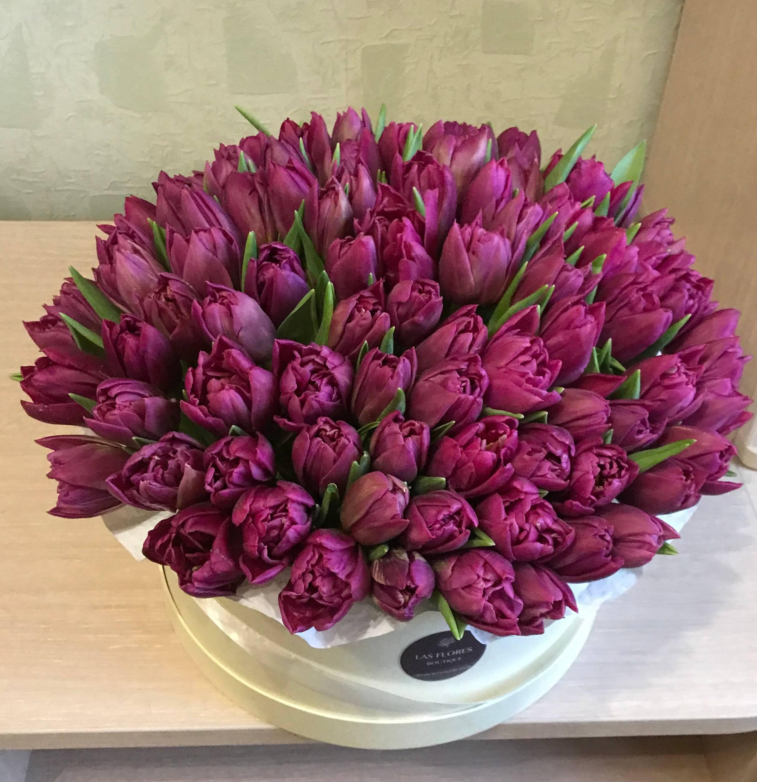 Пионовидные тюльпаны – как ухаживать и пересаживать, использование в ландшафтном дизайне