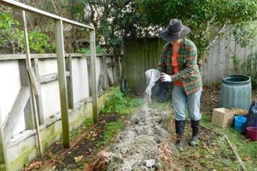 Древесная зола: применение на огороде для овощных, ягодных культур