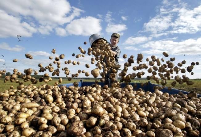 Определение химического состава картофеля