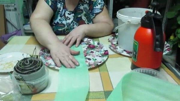 Рассада помидоров по методу юлии миняевой