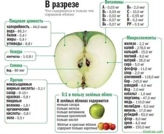 Яблоки польза и вред для человеческого организма - vsadu.ru