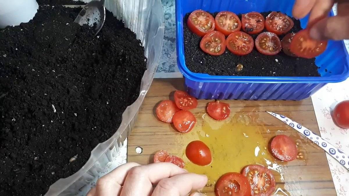 На каком расстоянии сажать помидоры в грунт и теплицу, видео, фото