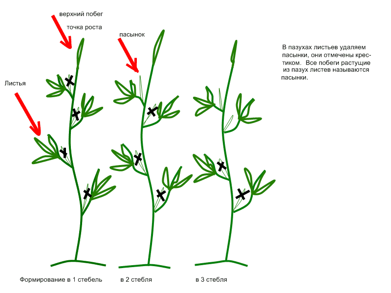 Как пасынковать огурцы в теплице и открытом грунте пошагово, фото