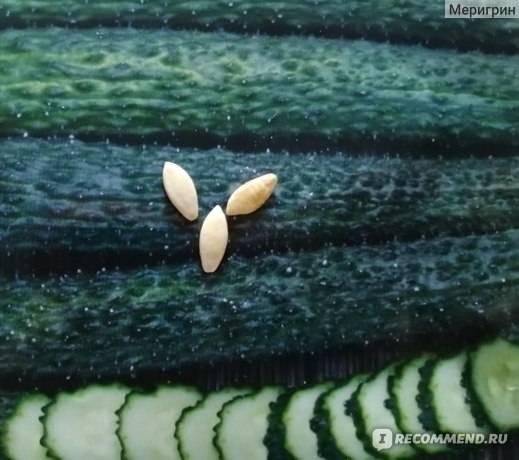 Сорт огурцов изумрудный поток f1: характеристика, описание с фото, отзывы