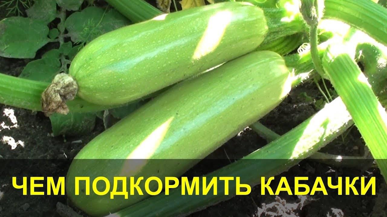 Как и чем подкормить тыкву в открытом грунте для хорошего урожая