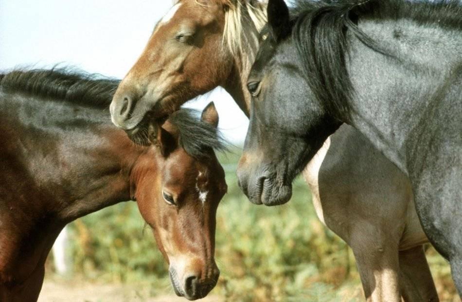 Как спят лошади - стоя или лежа, разбираемся в мифе