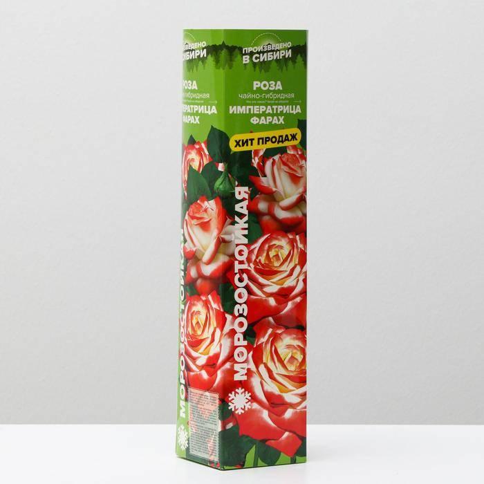 Удивительно красивый сорт розы «императрица фарах»