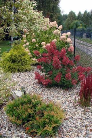 Гортензия вимс ред посадка и уход в открытом грунте - сад и огород