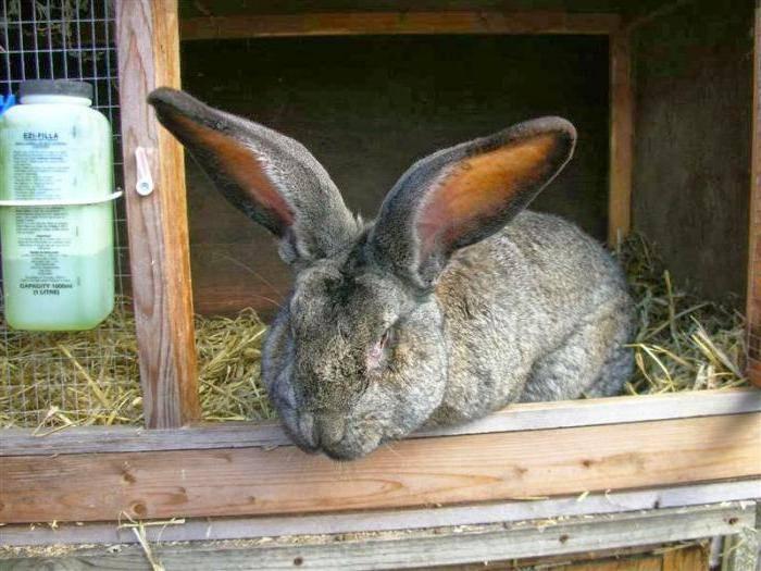 Какие веточки разрешено давать кролику в зимний период: можно ли ель и сосну