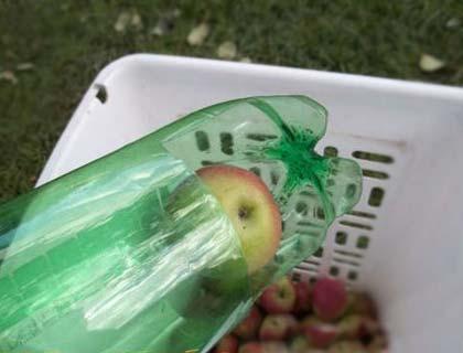 Приспособление для сбора яблок с дерева своими руками приспособление для сбора яблок с дерева своими руками