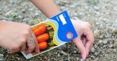 Как садить морковь, чтобы быстрее взошла