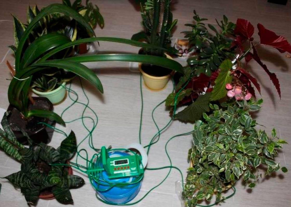 Автополив для комнатных растений своими руками — мой биосад