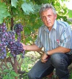 Виноделие в россии: как развивалось, что представляет собой сейчас, что поменяет новый закон и запретят ли виноматериалы | bankstoday