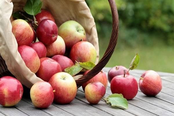 Сладкие сорта яблонь: описание и характеристика вида яблок, достоинства и недостатки + фото