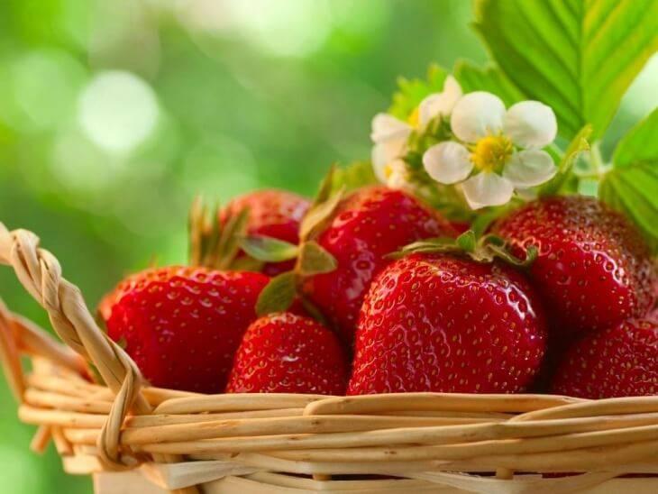 Советы как подкормить клубнику весной, правила ухода и обработки