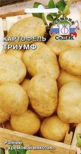 Картофель триумф — описание сорта, фото, отзывы, посадка и уход